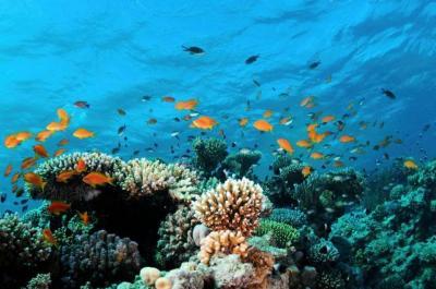 20141223231854-arrecifes.jpg