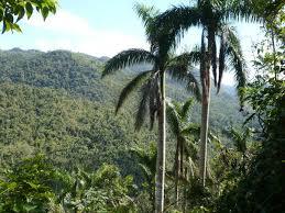 Cooperación caracteriza protección de patrimonio forestal de Cuba